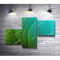 Зеленые листья. Макро