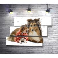Шотландская овчарка и щенок
