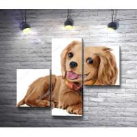 Портрет веселого щенка