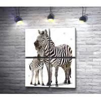 Мама-зебра и жеребенок