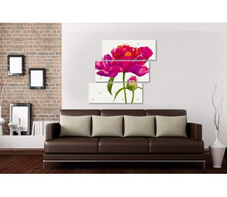 Розовый цветок Ранункулюс