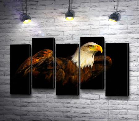 Орел с белой головой