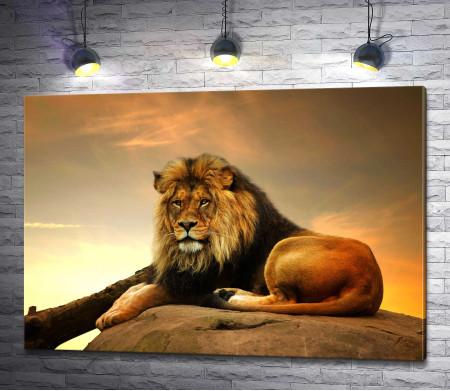 Величественный лев лежит на камне