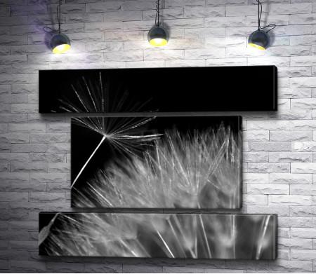Одуванчик в макросъемке, черно-белое фото