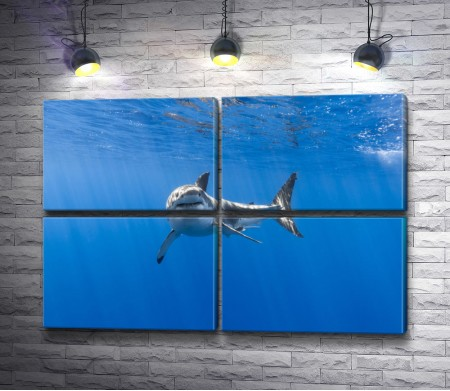 Белая акула в открытом океане