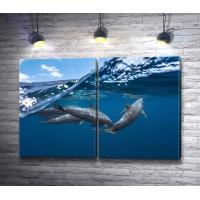 Дельфины у кромки воды
