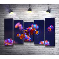 Аквариумные рыбки Клоун оцеллярис