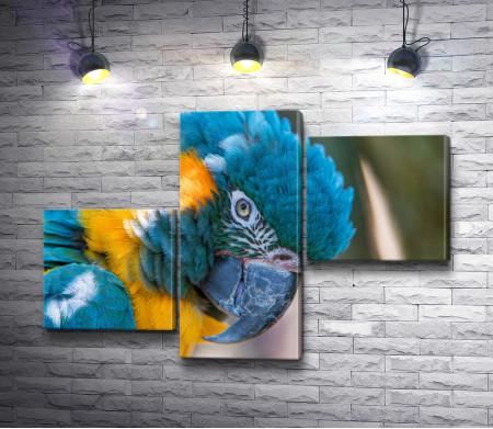 Сине-жёлтый попугай ара