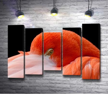 Оранжевый фламинго