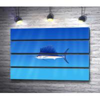 Рыба парусник в открытом море