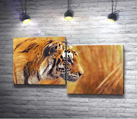 Тигр в пшеничном поле