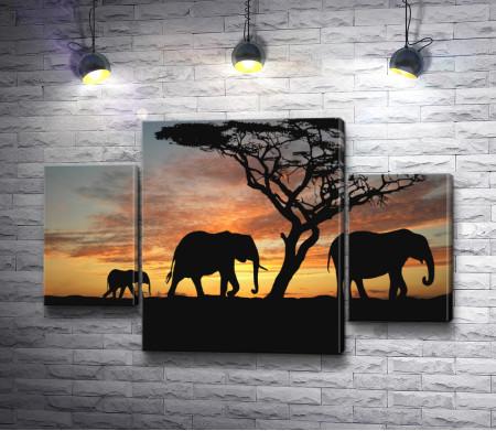 Слоны в африканской Саванне вечером
