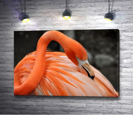 Изящный оранжевый фламинго