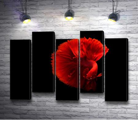 Красная рыбка на черном фоне