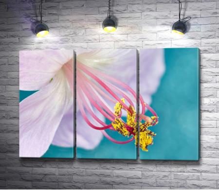 Цветок герани. Макросъемка