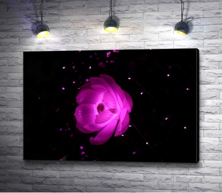 Розовый светящийся лотос на черном фоне