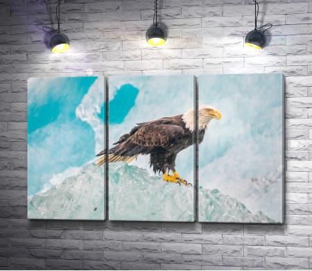 Орел на вершине айсберга