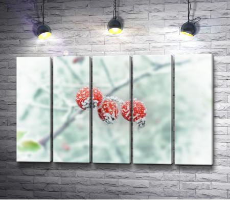 Красные ягоды на зимней ветке