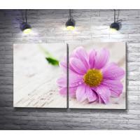Фиолетовый цветок с каплями воды