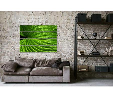 Зеленый лист с каплями воды. Макроснимок