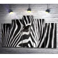 Взгляд зебры, макросъемка