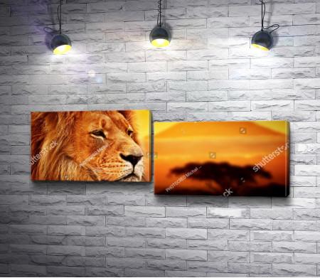 Морда льва