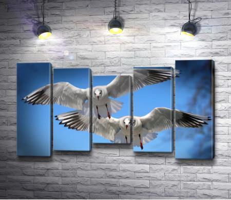 Белые морские чайки в полете