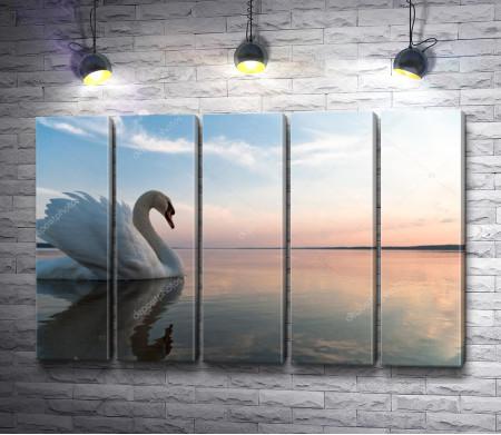 Красивый лебедь на зеркальном озере во время заката