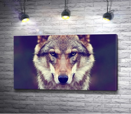 Грозный волчий взгляд