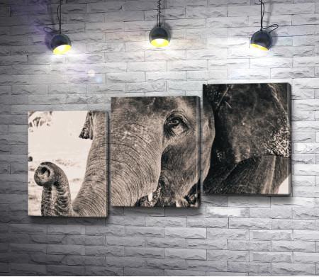 Грустный слон, фото в черно-белой гамме