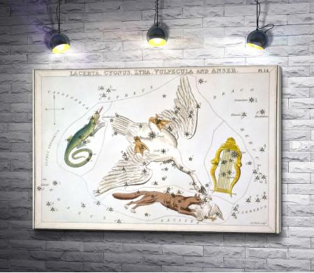 "Сидни Холл, ""Зеркало Урании - Ящерица, Лебедь, Лира, и Лисичка с Гусем"""