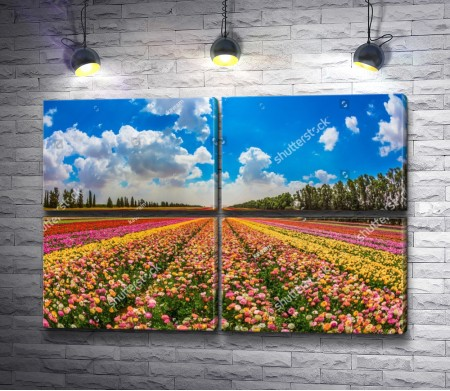 Весенние поля цветов, Израиль