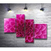Цветок с розовыми лепестками. Макросъемка