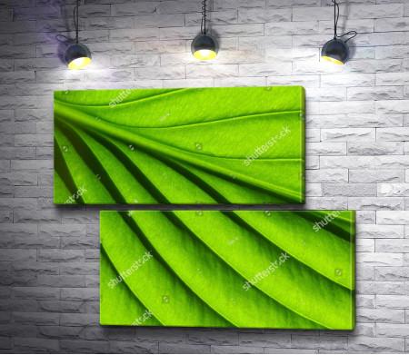 Макросъемка зеленого листка