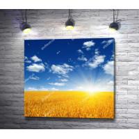 Украинский пейзаж: голубое небо над пшеничным полем
