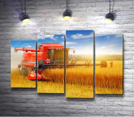 Комбайн собирает урожай на пшеничном поле