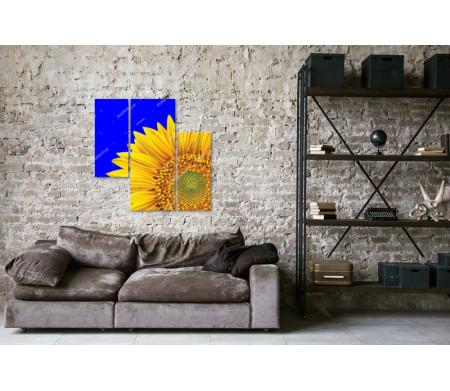 Солнечный подсолнух, макросъемка
