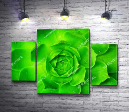 Ярко-зеленый суккулент. Макросъемка