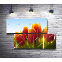 Букет тюльпанов в солнечных лучах