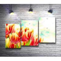 Букет тюльпанов в солнечных бликах
