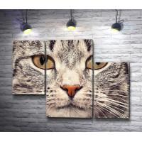 Портрет полосатого кота, смотрящего в камеру