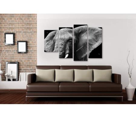 Черно-белое фото слона
