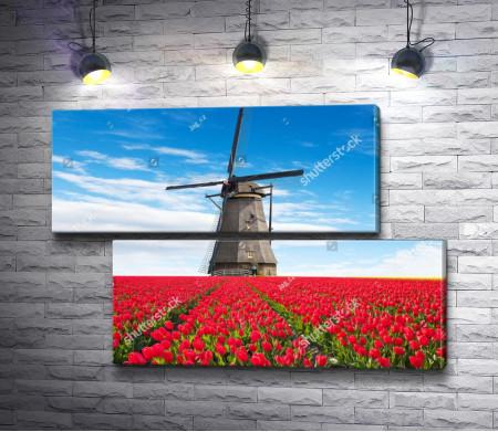 Деревянная мельница в поле красных тюльпанов