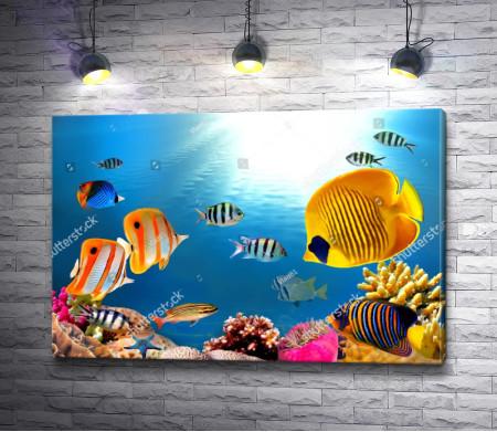 Подводный мир тропиков
