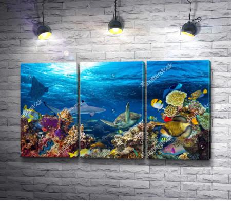 Красота подводного мира с кораллами, рабами и черепахами