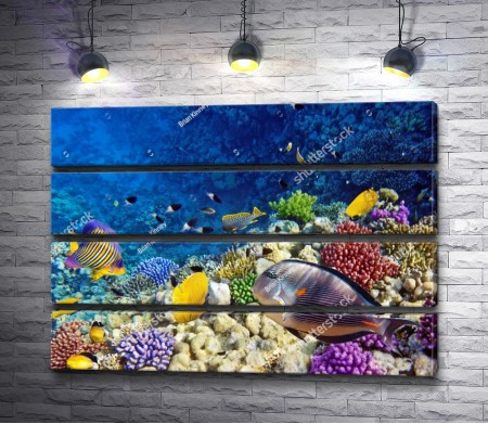 Тайны подводного мира