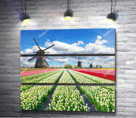 Голландские тюльпановые поля с мельницами