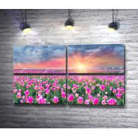 Закат солнца над полем тюльпанов