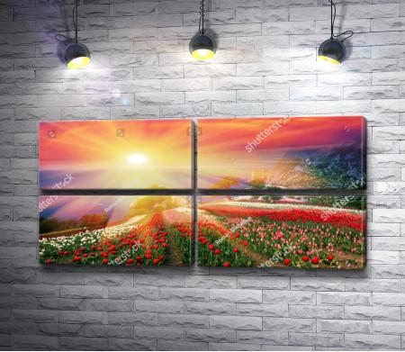 Тюльпанные поля в солнечных лучах
