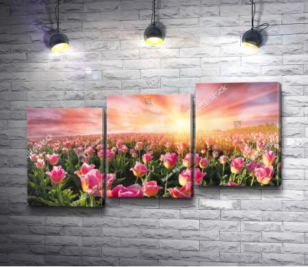 Невероятный закат над полем тюльпанов